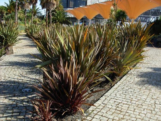 Planta sepando grandes ambientes