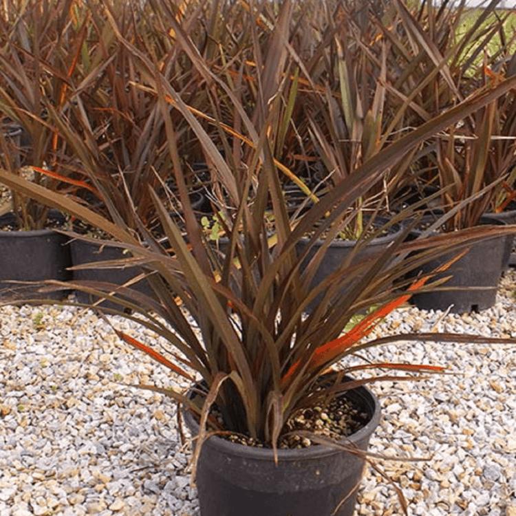 Utilize vasos maiores para realizar o plantio